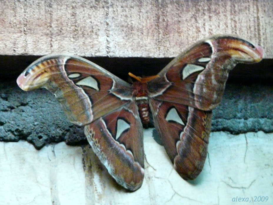 My Encounters With Butterflies And Moths Life Of Lopsided 8